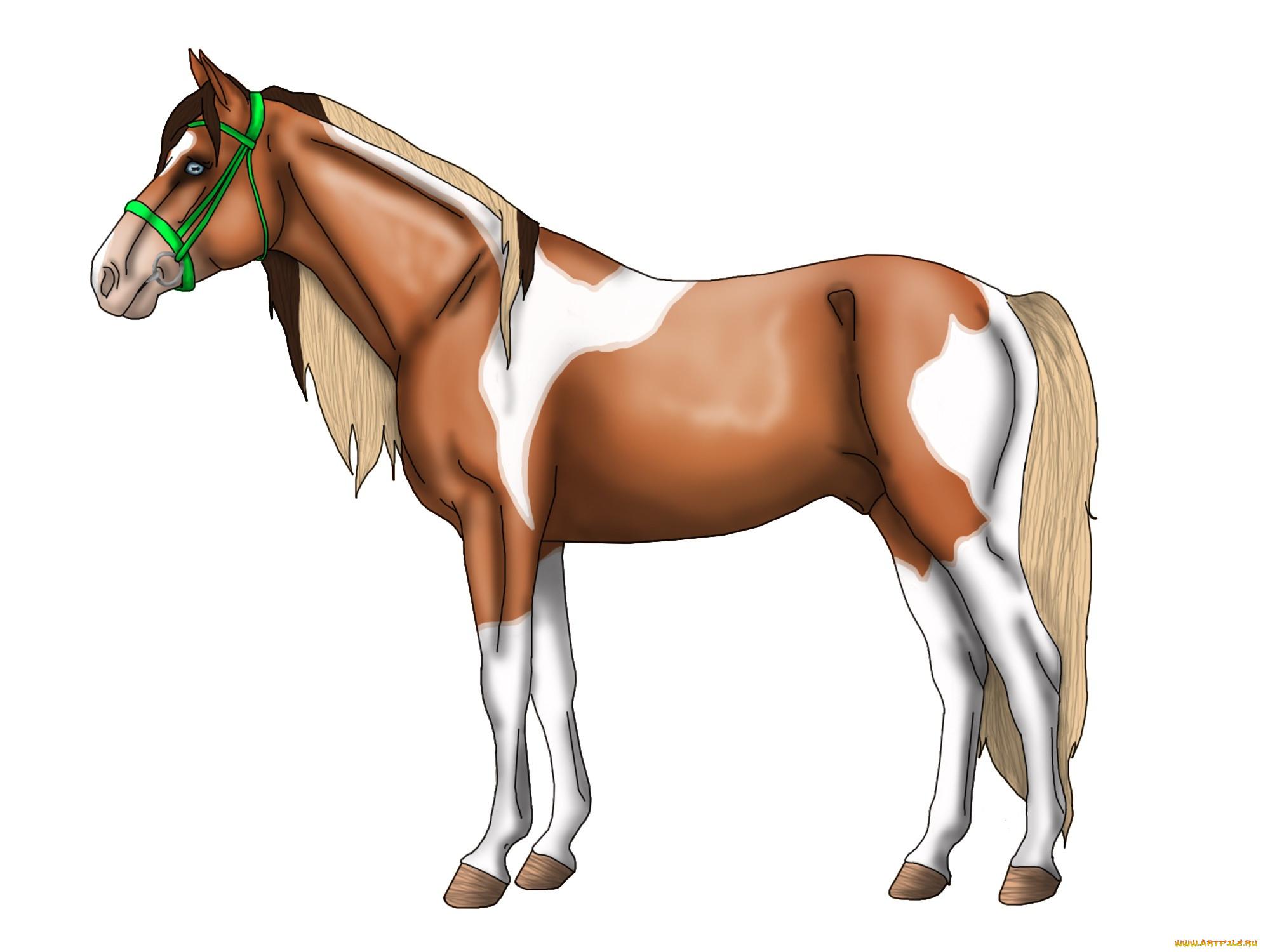 Картинка лошадка рисованная для детей